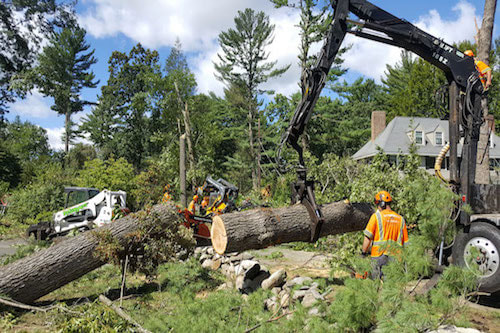 Tree Removal Service in Cincinnati OH