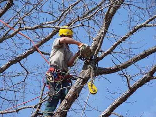 Tree Trimming Cincinnati OH