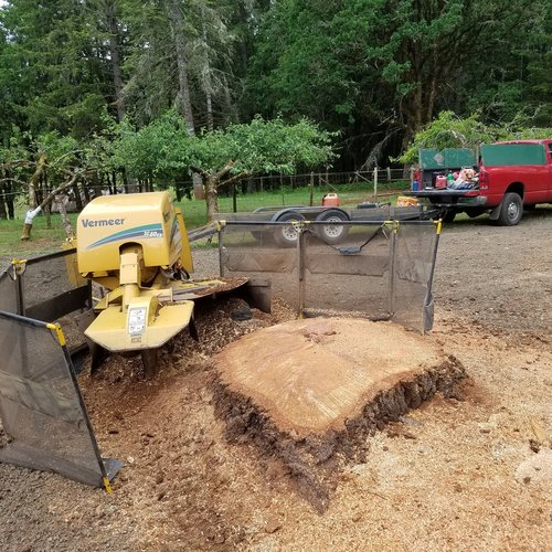 Cincinnati Stump Grinding