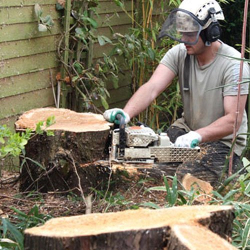 Stump Grinding Service Cincinnati